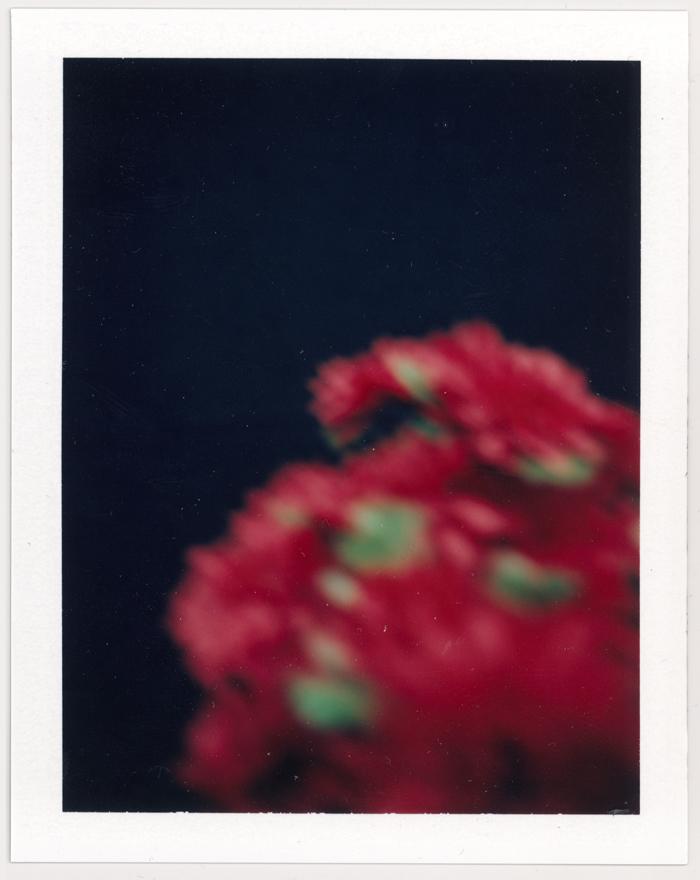 Instant Colour Photographs